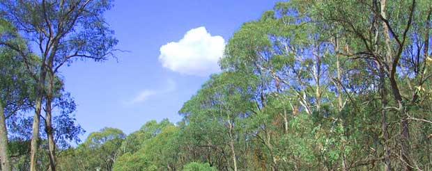 オーストラリアのはちみつについて森