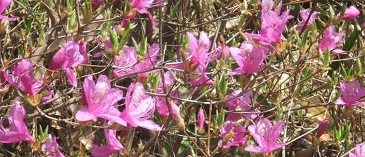 はちみつを使ったアイデアいろいろユーカリはちみつアイアンバーク花わさび桜鯛のかるぱっちょ