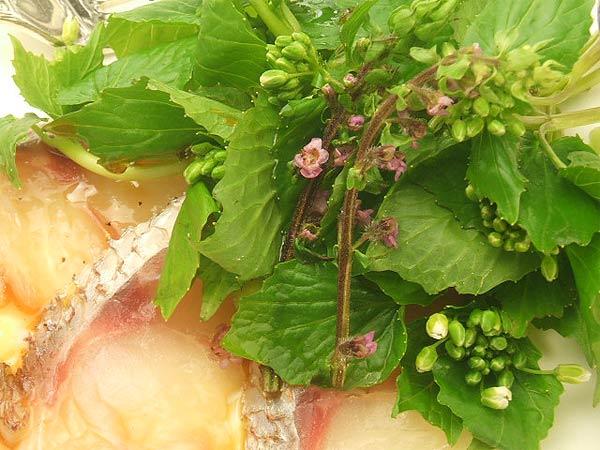 はちみつを使ったアイデアいろいろユーカリはちみつアイアンバーク花わさび桜鯛のカルパッチョ3