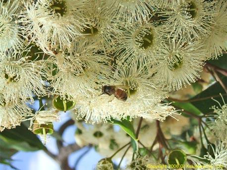 無農薬はちみつオーストラリア産はちみつとユーカリハチミツの専門店ミタミタのポリシー